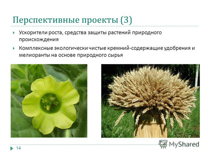 Перспективные проекты (3) Ускорители роста, средства защиты растений природного происхождения Комплексные экологически чистые кремний-содержащие удобрения и мелиоранты на основе природного сырья 14