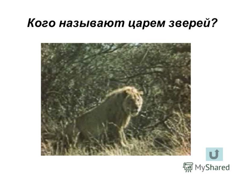 Кого называют царем зверей?