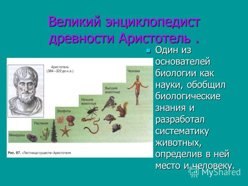 Великий энциклопедист древности Аристотель. Один из основателей биологии как науки, обобщил биологические знания и разработал систематику животных, определив в ней место и человеку. Один из основателей биологии как науки, обобщил биологические знания