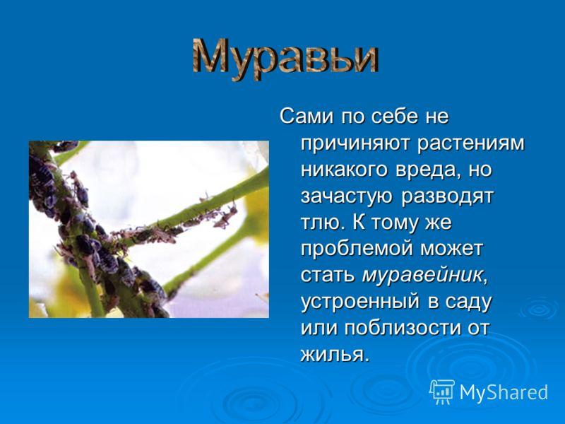 Сами по себе не причиняют растениям никакого вреда, но зачастую разводят тлю. К тому же проблемой может стать муравейник, устроенный в саду или поблизости от жилья.