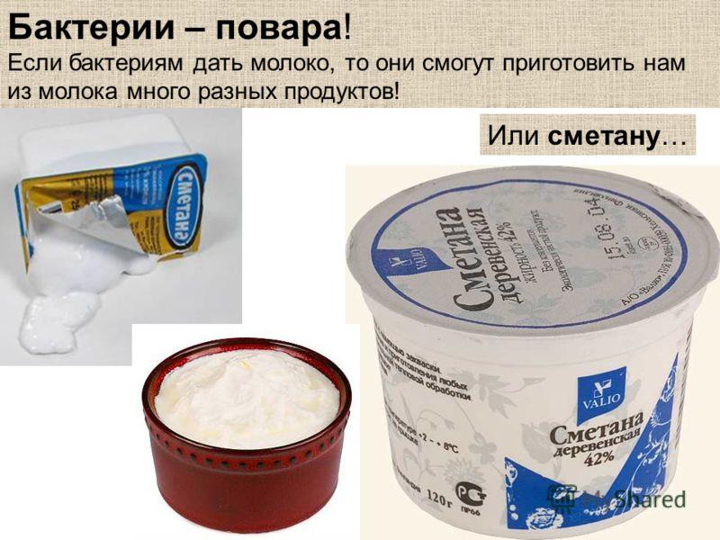 Бактерии – повара! Если бактериям дать молоко, то они смогут приготовить нам из молока много разных продуктов! Или сметану…