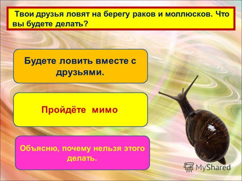 Твои друзья ловят на берегу раков и моллюсков. Что вы будете делать? Будете ловить вместе с друзьями. Пройдёте мимо. Объясню, почему нельзя этого делать.
