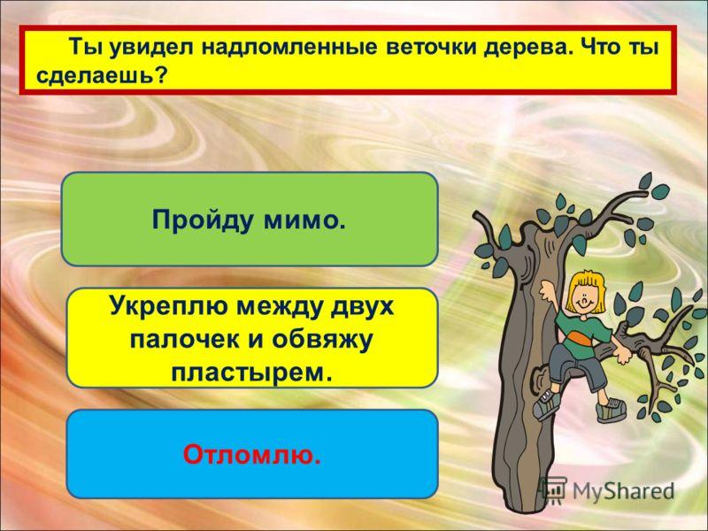 Ты увидел надломленные веточки дерева. Что ты сделаешь? Пройду мимо. Укреплю между двух палочек и обвяжу пластырем. Отломлю.