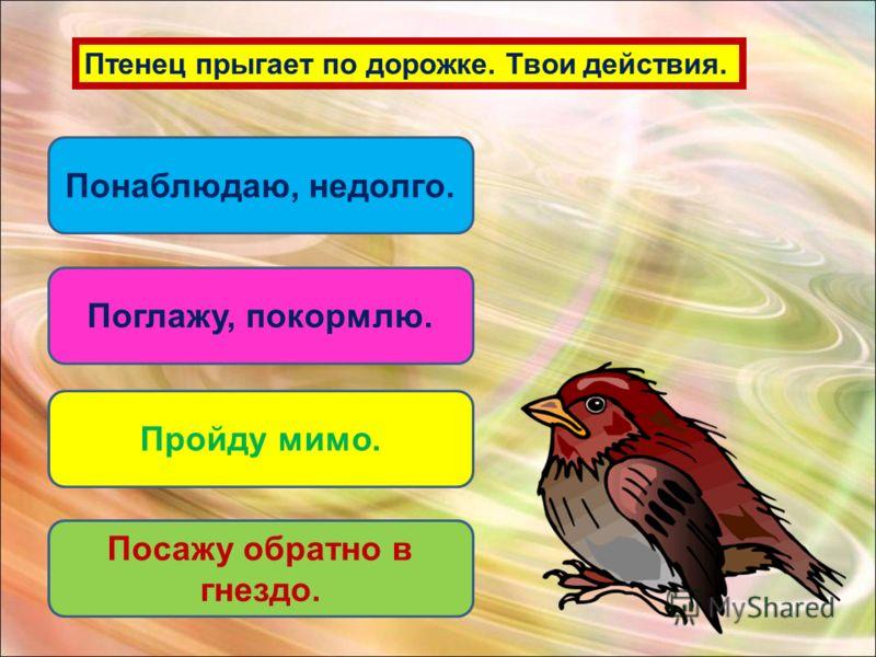 Птенец прыгает по дорожке. Твои действия. Поглажу, покормлю. Пройду мимо. Посажу обратно в гнездо. Понаблюдаю, недолго.