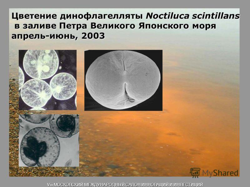 Цветение динофлагелляты Noctiluca scintillans в заливе Петра Великого Японского моря апрель-июнь, 2003 Viii МОСКОВСКИЙ МЕЖДУНАРОДНЫЙ САЛОН ИННОВАЦИЙ И ИНВЕСТИЦИЙ