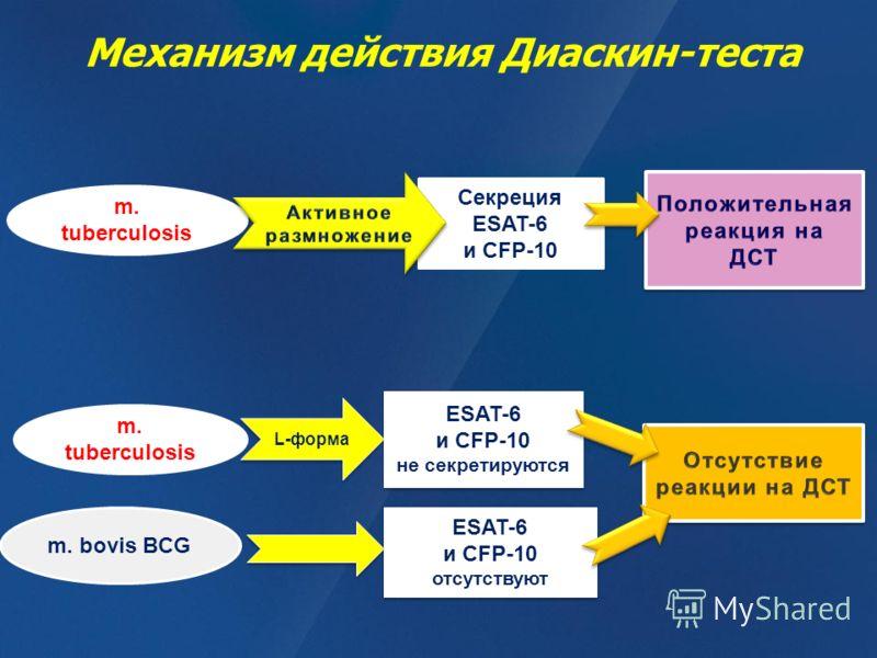 Механизм действия Диаскин-теста m. tuberculosis m. bovis BCG m. tuberculosis L-форма Секреция ESAT-6 и CFP-10 ESAT-6 и CFP-10 не секретируются ESAT-6 и CFP-10 не секретируются ESAT-6 и CFP-10 отсутствуют ESAT-6 и CFP-10 отсутствуют