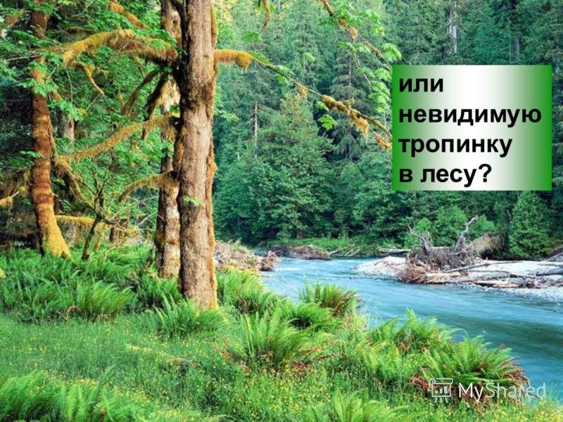 или невидимую тропинку в лесу?