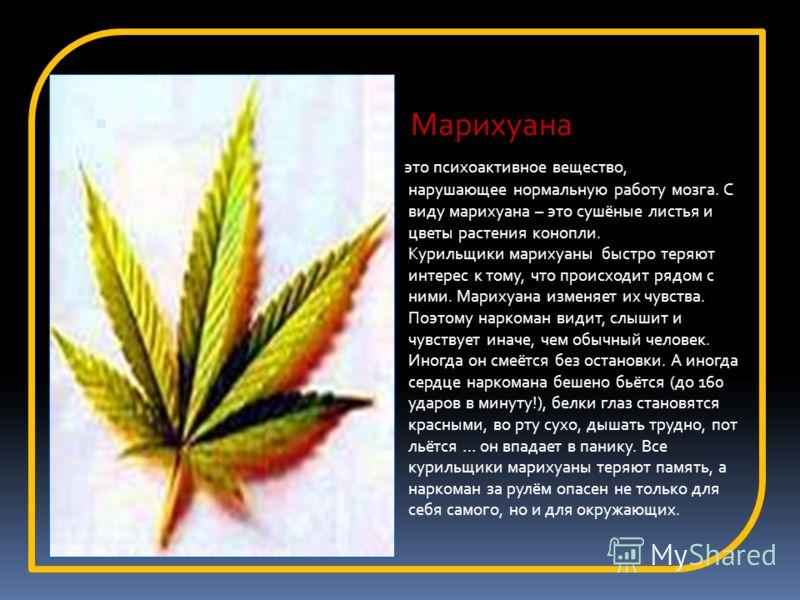 Марихуана это психоактивное вещество, нарушающее нормальную работу мозга. С виду марихуана – это сушёные листья и цветы растения конопли. Курильщики марихуаны быстро теряют интерес к тому, что происходит рядом с ними. Марихуана изменяет их чувства. П