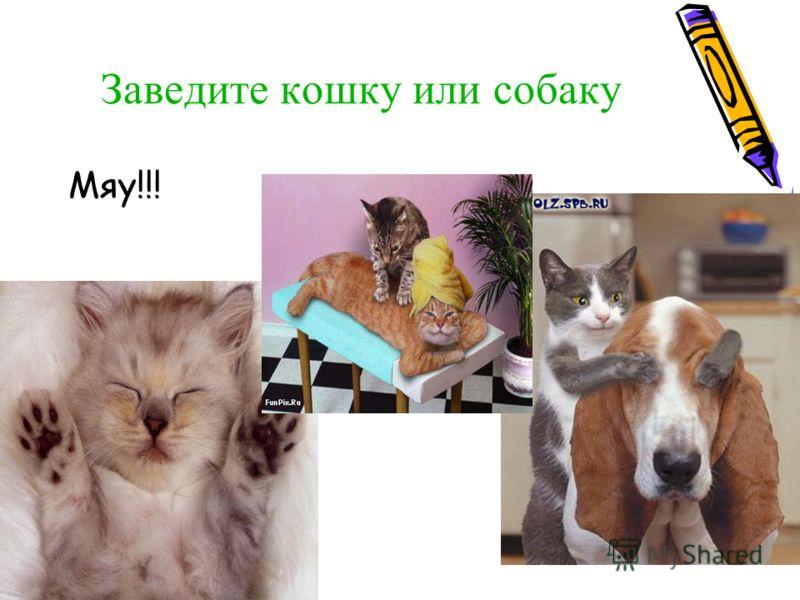 Мяу!!! Заведите кошку или собаку