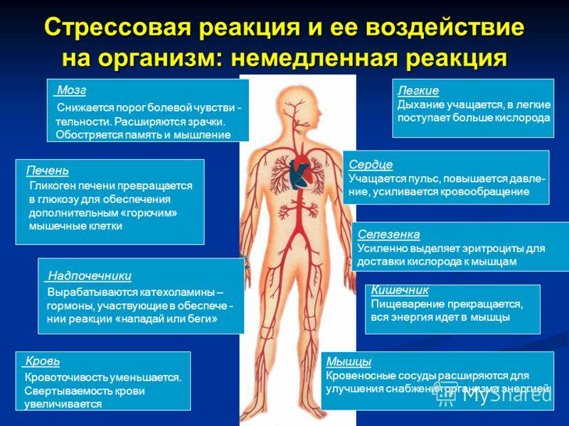 Стрессовая реакция и ее воздействие на организм: немедленная реакция Мозг Снижается порог болевой чувстви - тельности. Расширяются зрачки. Обостряется память и мышление Сердце Учащается пульс, повышается давле- ние, усиливается кровообращение Надпоче
