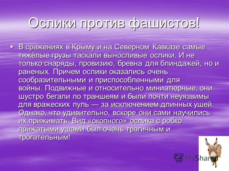 Ослики против фашистов! В сражениях в Крыму и на Северном Кавказе самые тяжёлые грузы таскали выносливые ослики. И не только снаряды, провизию, бревна для блиндажей, но и раненых. Причем ослики оказались очень сообразительными и приспособленными для