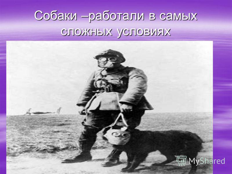 Собаки –работали в самых сложных условиях