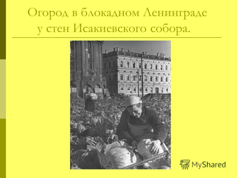 Огород в блокадном Ленинграде у стен Исакиевского собора.