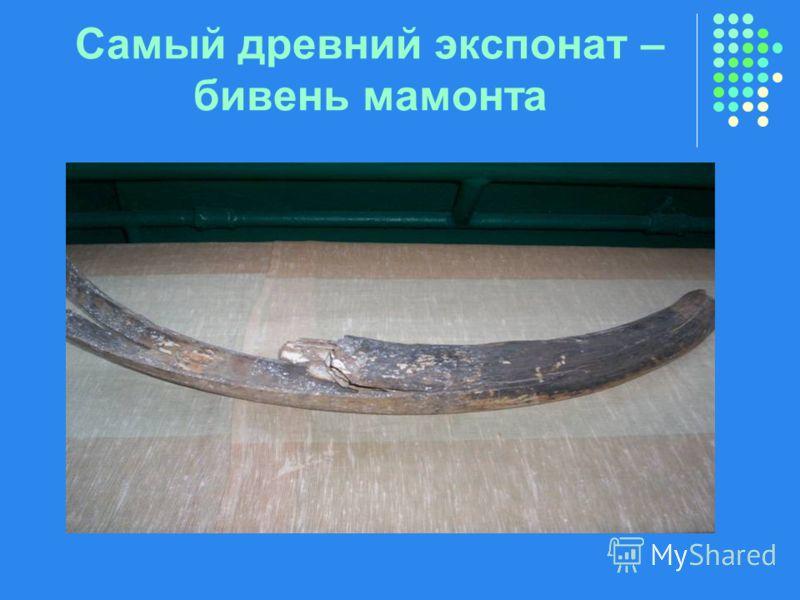 Самый древний экспонат – бивень мамонта