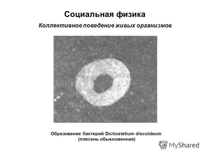Социальная физика Коллективное поведение живых организмов Образование бактерий Dictiostelium discoideum (плесень обыкновенная)