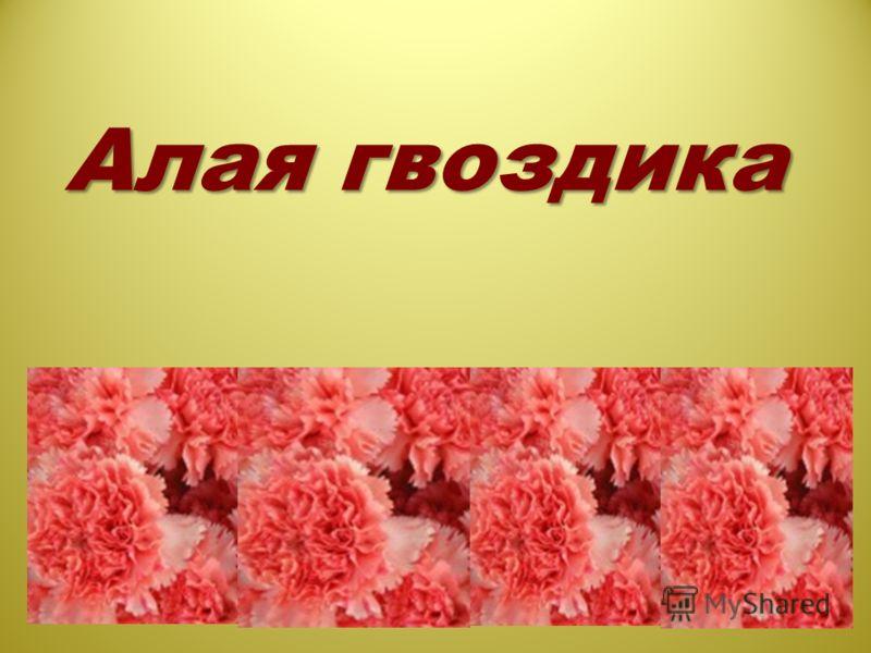 Алая гвоздика
