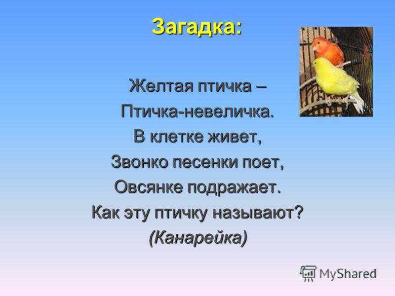 Загадка: Желтая птичка – Птичка-невеличка. В клетке живет, Звонко песенки поет, Овсянке подражает. Как эту птичку называют? (Канарейка)