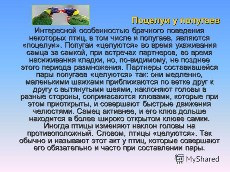 Поцелуи у попугаев Интересной особенностью брачного поведения некоторых птиц, в том числе и попугаев, являются «поцелуи». Попугаи «целуются» во время ухаживания самца за самкой, при встречах партнеров, во время насиживания кладки, но, по-видимому, не