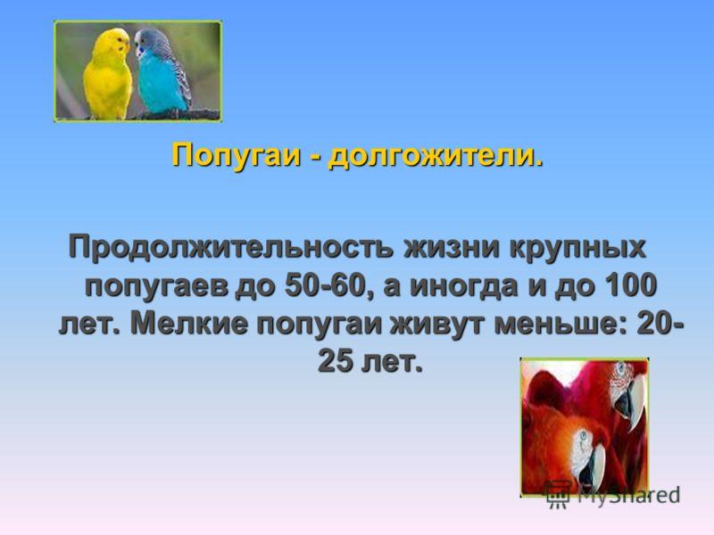 Попугаи - долгожители. Продолжительность жизни крупных попугаев до 50-60, а иногда и до 100 лет. Мелкие попугаи живут меньше: 20- 25 лет.
