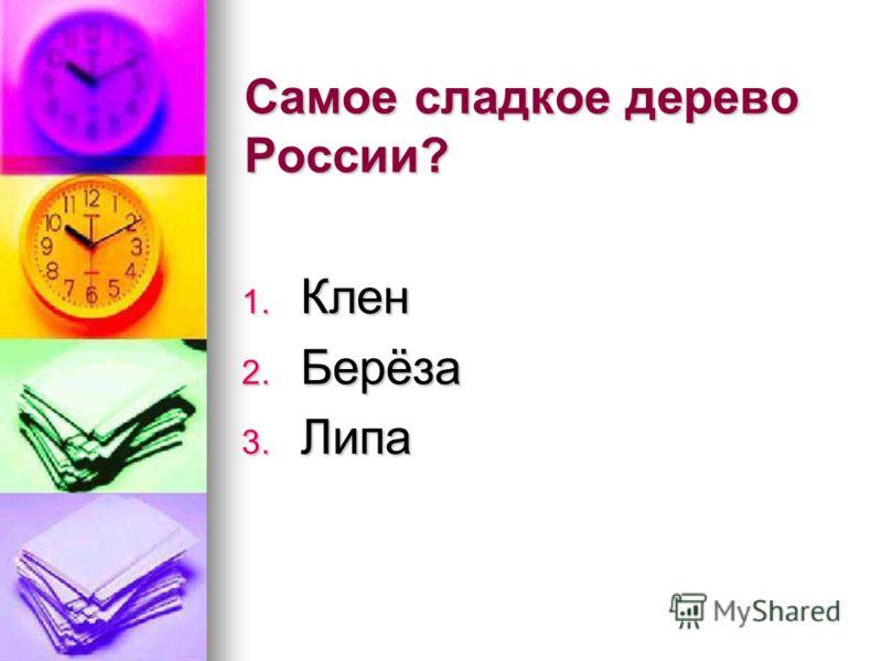 Самое сладкое дерево России? 1. Клен 2. Берёза 3. Липа