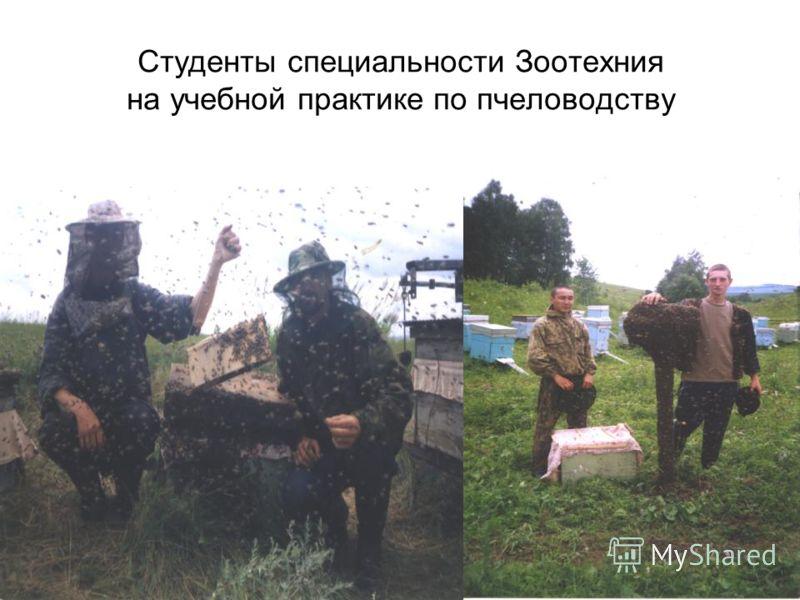 Студенты специальности Зоотехния на учебной практике по пчеловодству