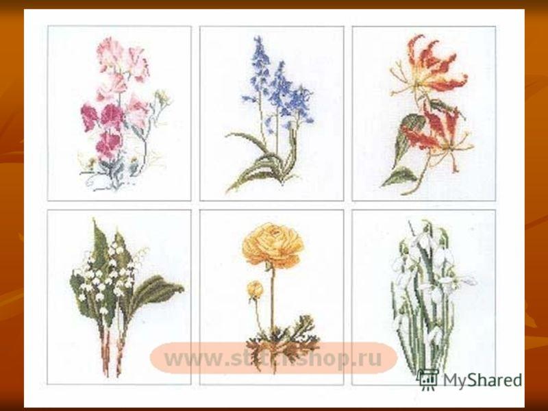 Герба́рий (лат. herbárium, от herba «трава») коллекция засушенных растений, препарированных в согласии с определёнными правилами. Обычно гербарные образцы после высушивания монтируются на листах плотной бумаги. Герба́рий (лат. herbárium, от herba «тр