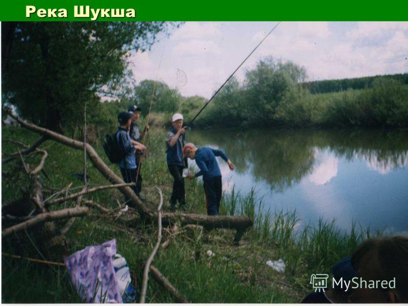 Река Шукша