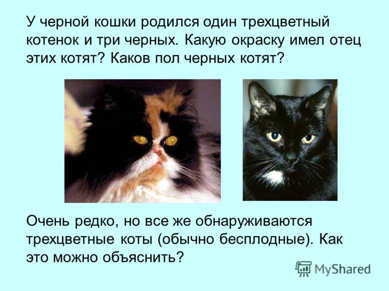 У черной кошки родился один трехцветный котенок и три черных. Какую окраску имел отец этих котят? Каков пол черных котят? Очень редко, но все же обнаруживаются трехцветные коты (обычно бесплодные). Как это можно объяснить?