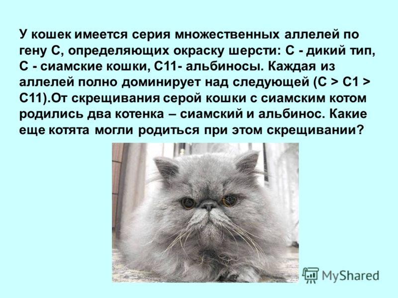 У кошек имеется серия множественных аллелей по гену С, определяющих окраску шерсти: С - дикий тип, С - сиамские кошки, С11- альбиносы. Каждая из аллелей полно доминирует над следующей (С > С1 > С11).От скрещивания серой кошки с сиамским котом родилис