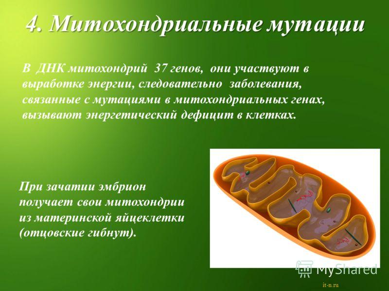 В ДНК митохондрий 37 генов, они участвуют в выработке энергии, следовательно заболевания, связанные с мутациями в митохондриальных генах, вызывают энергетический дефицит в клетках. При зачатии эмбрион получает свои митохондрии из материнской яйцеклет