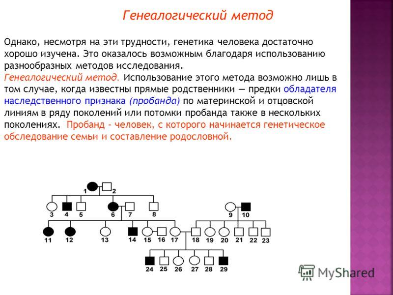 Генеалогический метод Однако, несмотря на эти трудности, генетика человека достаточно хорошо изучена. Это оказалось возможным благодаря использованию разнообразных методов исследования. Генеалогический метод. Использование этого метода возможно лишь