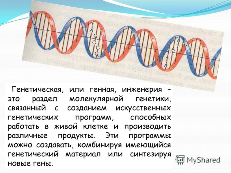 Генетическая, или генная, инженерия - это раздел молекулярной генетики, связанный с созданием искусственных генетических программ, способных работать в живой клетке и производить различные продукты. Эти программы можно создавать, комбинируя имеющийся