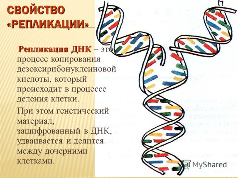СВОЙСТВО «РЕПЛИКАЦИИ» Репликация ДНК Репликация ДНК – это процесс копирования дезоксирибонуклеиновой кислоты, который происходит в процессе деления клетки. При этом генетический материал, зашифрованный в ДНК, удваивается и делится между дочерними кле