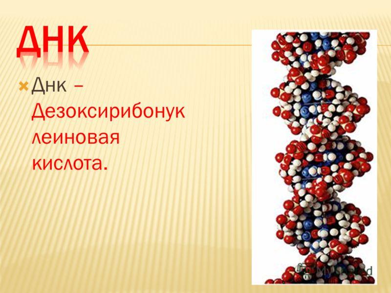 Днк – Дезоксирибонук леиновая кислота.