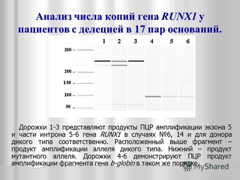 Анализ числа копий гена RUNX1 у пациентов с делецией в 17 пар оснований. Дорожки 1-3 представляют продукты ПЦР амплификации экзона 5 и части интрона 5-6 гена RUNX1 в случаях 6, 14 и для донора дикого типа соответственно. Расположенный выше фрагмент –
