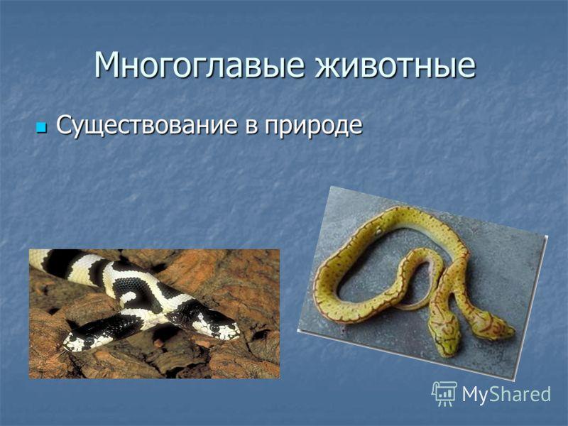Многоглавые животные Существование в природе Существование в природе