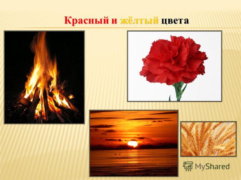 Красный и жёлтый цвета