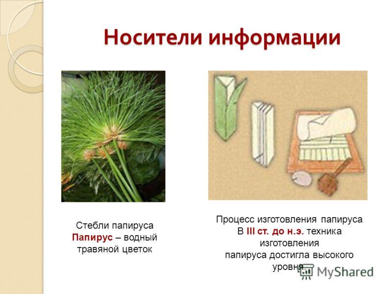 Носители информации Стебли папируса Папирус – водный травяной цветок Процесс изготовления папируса В III ст. до н.э. техника изготовления папируса достигла высокого уровня.