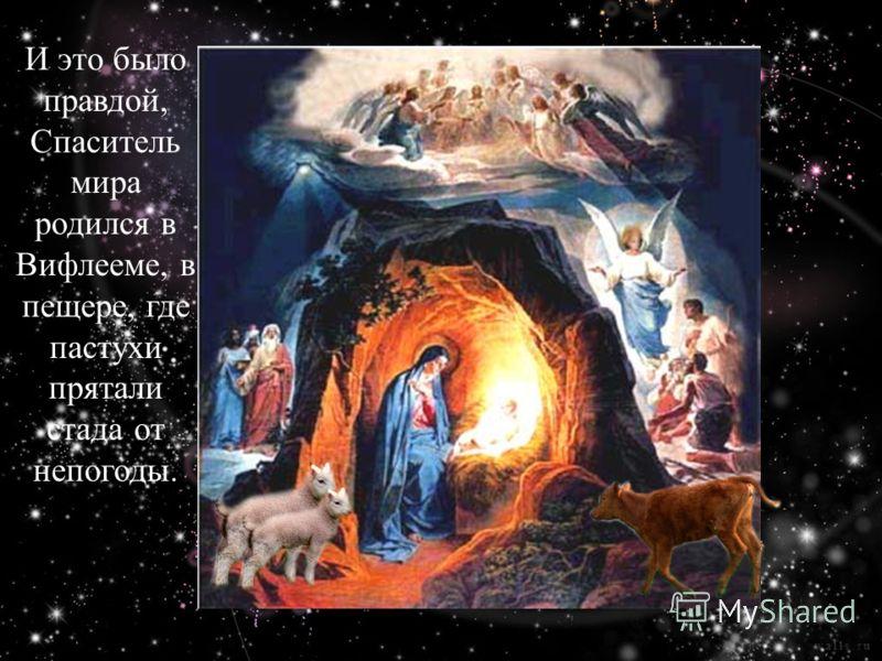 И это было правдой, Спаситель мира родился в Вифлееме, в пещере, где пастухи прятали стада от непогоды.