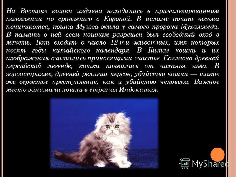 На Востоке кошки издавна находились в привилегированном положении по сравнению с Европой. В исламе кошки весьма почитаются, кошка Муэзза жила у самого пророка Мухаммеда. В память о ней всем кошкам разрешен был свободный вход в мечеть. Кот входит в чи