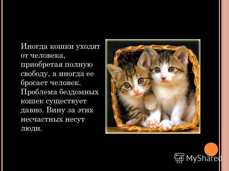 Иногда кошки уходят от человека, приобретая полную свободу, а иногда ее бросает человек. Проблема бездомных кошек существует давно. Вину за этих несчастных несут люди.