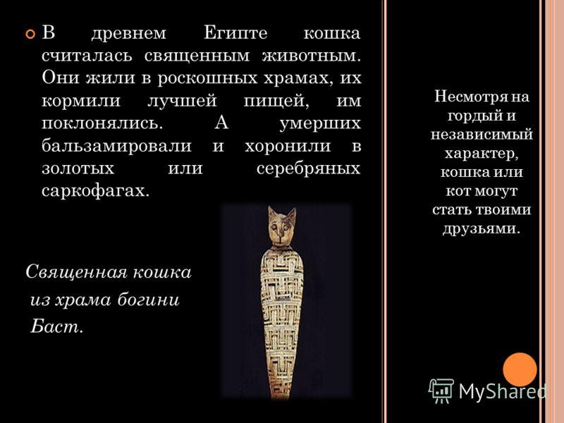 Несмотря на гордый и независимый характер, кошка или кот могут стать твоими друзьями. В древнем Египте кошка считалась священным животным. Они жили в роскошных храмах, их кормили лучшей пищей, им поклонялись. А умерших бальзамировали и хоронили в зол