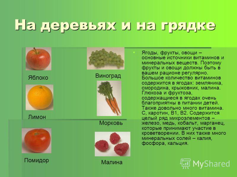 На деревьях и на грядке Ягоды, фрукты, овощи – основные источники витаминов и минеральных веществ. Поэтому фрукты и овощи должны быть в вашем рационе регулярно. Большое количество витаминов содержится в ягодах: земляника, смородина, крыжовник, малина