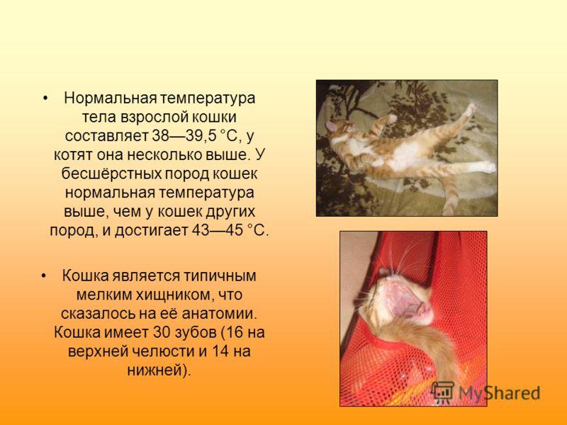 Нормальная температура тела взрослой кошки составляет 3839,5 °C, у котят она несколько выше. У бесшёрстных пород кошек нормальная температура выше, чем у кошек других пород, и достигает 4345 °C. Кошка является типичным мелким хищником, что сказалось