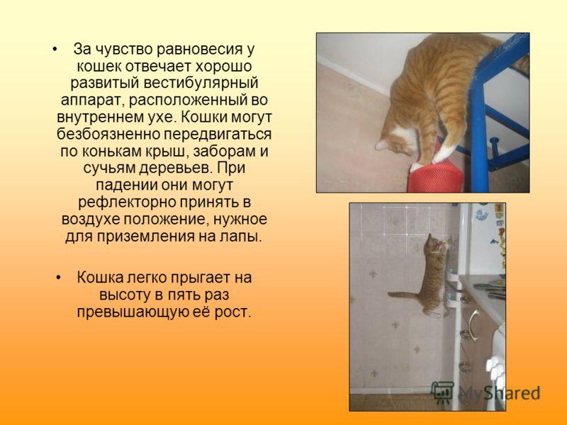 За чувство равновесия у кошек отвечает хорошо развитый вестибулярный аппарат, расположенный во внутреннем ухе. Кошки могут безбоязненно передвигаться по конькам крыш, заборам и сучьям деревьев. При падении они могут рефлекторно принять в воздухе поло