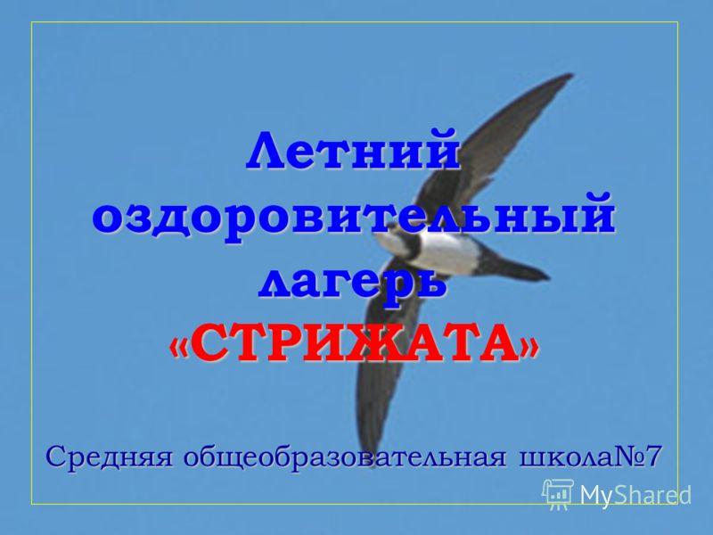 Летний оздоровительный лагерь «СТРИЖАТА» Средняя общеобразовательная школа7