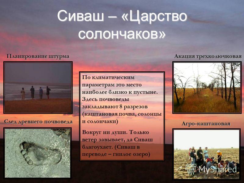 Сиваш – «Царство солончаков» Планирование штурма Акация трехколючковая След древнего почвоведа Агро-каштановая По климатическим параметрам это место наиболее близко к пустыне. Здесь почвоведы закладывают 8 разрезов (каштановая почва, солонцы и солонч
