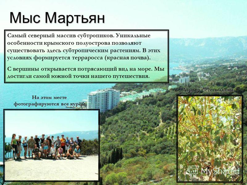 Мыс Мартьян На этом месте фотографируются все курсы Дерево-бесстыдница Самый северный массив субтропиков. Уникальные особенности крымского полуострова позволяют существовать здесь субтропическим растениям. В этих условиях формируется терраросса (крас