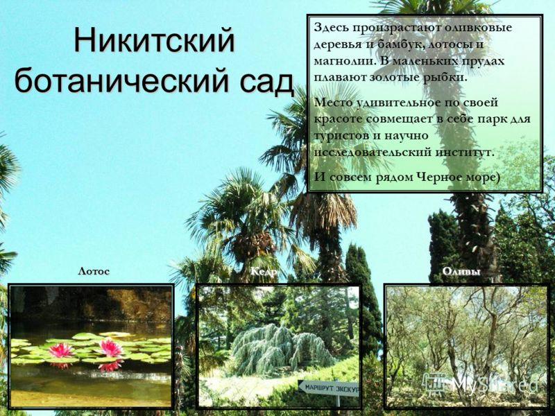 Никитский ботанический сад Здесь произрастают оливковые деревья и бамбук, лотосы и магнолии. В маленьких прудах плавают золотые рыбки. Место удивительное по своей красоте совмещает в себе парк для туристов и научно исследовательский институт. И совсе