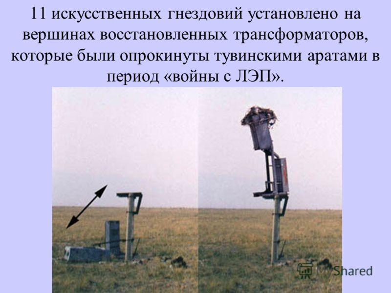 11 искусственных гнездовий установлено на вершинах восстановленных трансформаторов, которые были опрокинуты тувинскими аратами в период «войны с ЛЭП».